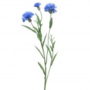 Cornflower, L68cm, blue